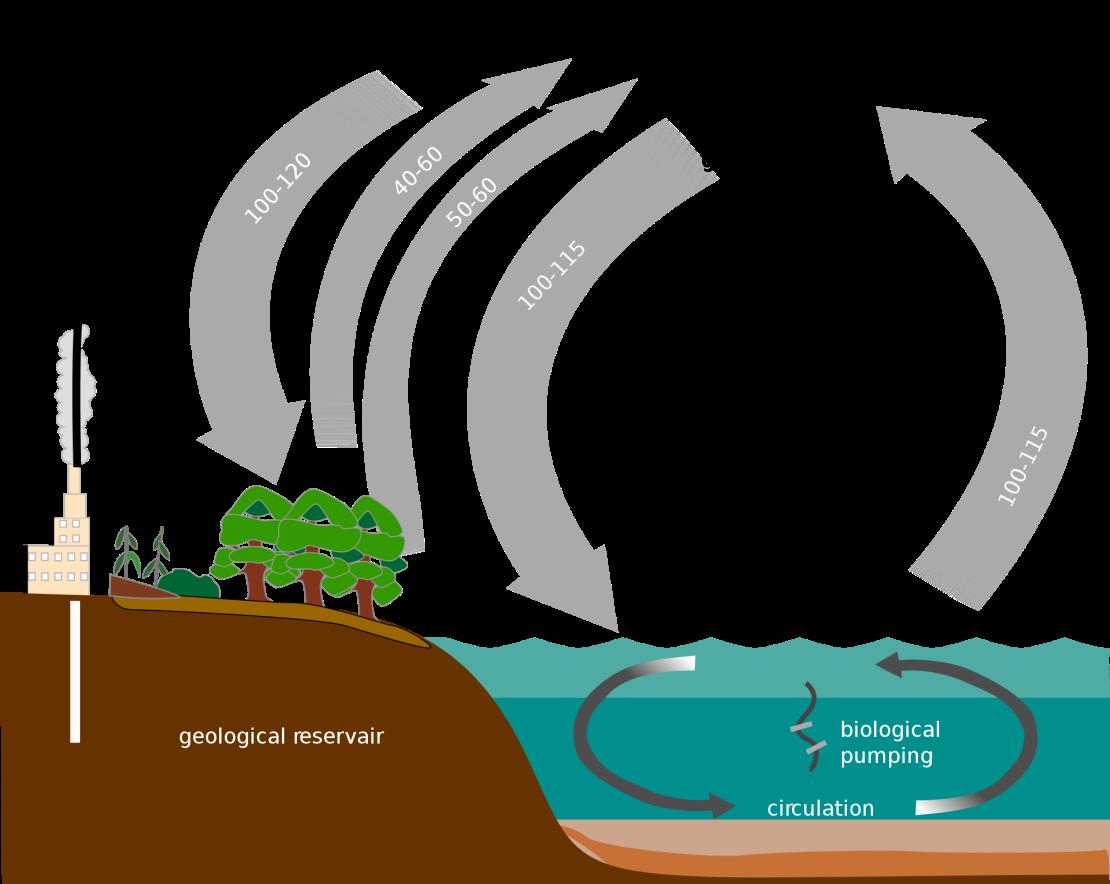 2000px-carbon_cycle-simple_diagram-svg